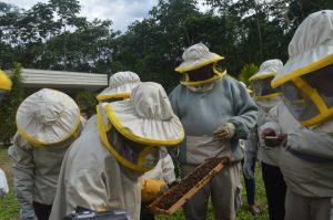 Neo-apicoltori al lavoro